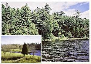 Cedar Homes Lot Purchase